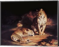 Framed Pair Of Leopards