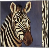 Framed Exotic Zebra - Mini