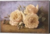 Framed Roses From Ivan