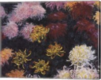 Framed Chrysanthemum, 1897