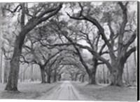 Framed Oak Arches