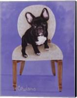 Framed Lulu The French Bulldog