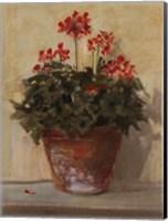 Framed Potted Geraniums I
