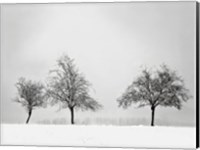 Framed Silhouettes Of Winter II