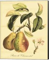 Framed Petite Tuscan Fruits IV