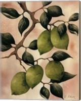 Framed Italian Harvest - Limes