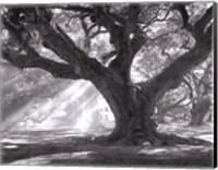 Framed Andrew Oak, Afternoon Light