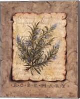 Framed Vintage Herbs - Rosemary