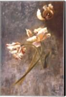 Framed Tulip Rhythms