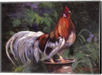 Framed Red And White Rooster