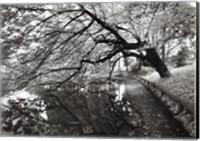 Framed Japanese Garden