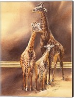 Framed Family of Giraffes