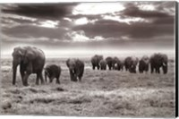 Framed Amboseli Elephants