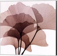 Framed Ginko Leaves II
