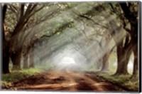 Framed Evergreen Plantation