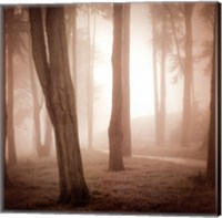 Framed Woods Study II
