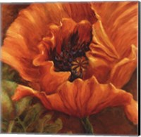 Framed Orange Poppy