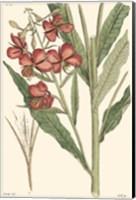 Framed Antique Floral Plate III