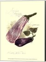 Framed Aubergine Eggplant