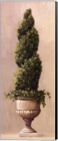 Framed Roman Topiary llI