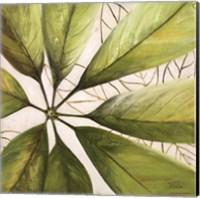 Framed Fresh Leaves II