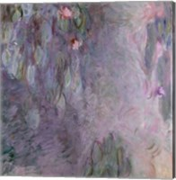 Framed Light-coloured Waterlilies, 1917-25