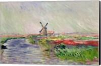 Framed Tulip Field in Holland