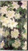Framed White Clematis, 1887