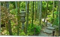 Framed Hasedera-Bamboo Grove