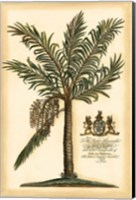 Framed British Colonial Palm II