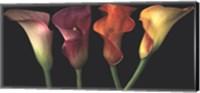 Framed Jewel Calla Lilies