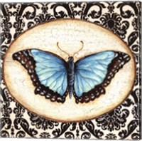 Framed Fanciful Butterfly II