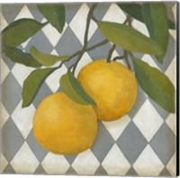 Framed Fruit and Pattern IV