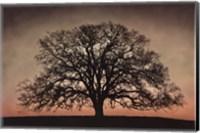 Framed Majestic Oak