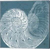 Framed Coastal Menagerie VI