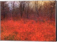 Framed Red Grass I