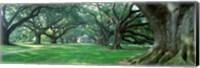 Framed USA, Louisiana, New Orleans, Oak Alley Plantation, plantation home through alley of oak trees