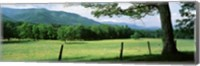Framed Meadow Surrounded By Barbed Wire Fence, Cades Cove, Great Smoky Mountains National Park, Tennessee, USA