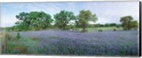 Framed Field of Bluebonnet flowers, Texas, USA