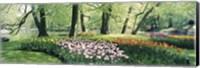 Framed Flowers in a garden, Keukenhof Gardens, Netherlands