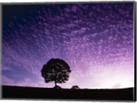 Framed Silhouette of solitary tree with purple sunset