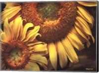 Framed Floral Beauty I