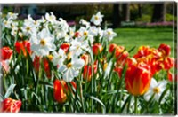 Framed Tulips and other flowers at Sherwood Gardens, Baltimore, Maryland, USA