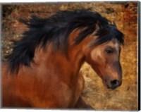 Framed Wild Horse