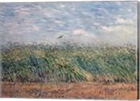 Framed Wheatfield with Lark, 1887