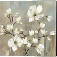 Framed Sweetbay Magnolia II
