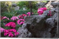 Framed Flowers and Rocks in Traditional Chinese Garden, China