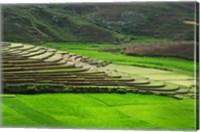 Framed Spectacular green rice field in rainy season, Ambalavao, Madagascar