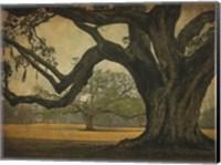 Framed Two Oaks in Rain, Audubon Gardens