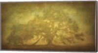 Framed St. Joe Plantation Oak in Fog 3